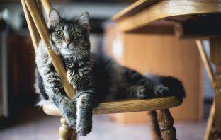 Van plan om een kat te kopen? Dit moet je weten!