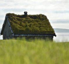Dit is waarom groene daken zo populair zijn